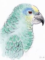 animal sketch: amazone by Araless