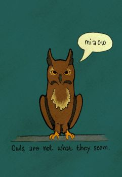 Owls Are Not What They Seem by fjara