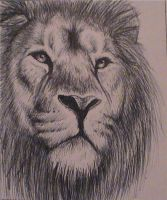 Lion by TheMajesticCarnival