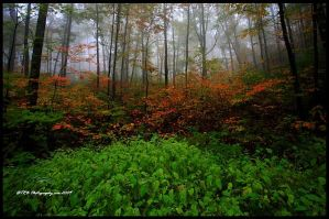 Changing Colors by TRBPhotographyLLC