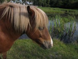 Horse's head at lake STOCK by cutedeviantfangirl