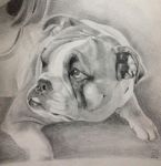 Commission - bulldog detail by paperthin-z