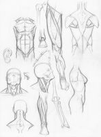 Random anatomy sketches by RV1994