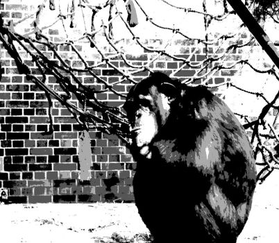 Great Apes by Faunish