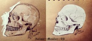 Skull study on Toned Paper 12 12 14 by anime-master-96