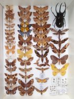 Moth Collection by VinVagia
