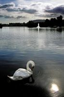 Castle Douglas: swan+fountain by Coigach
