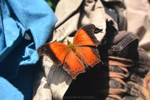 Laos Butterfly by drewhoshkiw