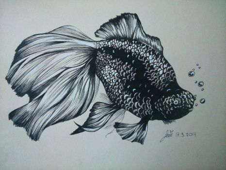 Gold Fish Sketch by 22DreamOfMidnight22