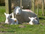 Mum and twins by piglet365