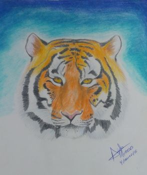 Tiger by AidaGrace