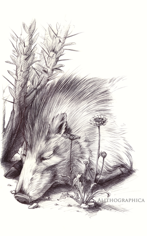 Javelina by Alithographica