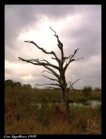 The Old Tree by Cillana