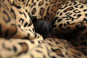 Naptime by Leopardflower