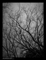 Darksome Trees by athos-gfx