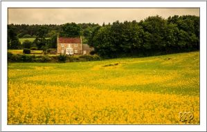 Yellow Divide by SnapperRod