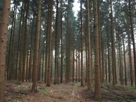 STOCK forest 2 by Inilein