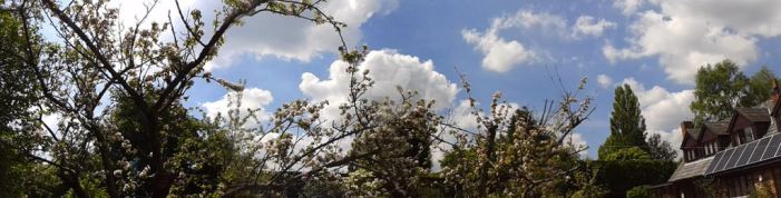 Sky, Clouds Trees and Flowers by blackroselover