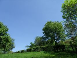 A meadow, a hedge and some trees by BMFMhero1991