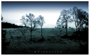 Whispering by caithness155
