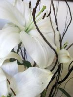 White Lily by our-lady-of-sorrows1