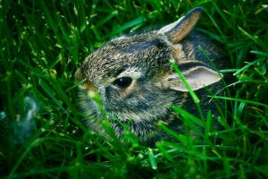 Baby Bunny by disco-ball