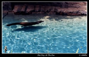 Hot Day At The Zoo by simba