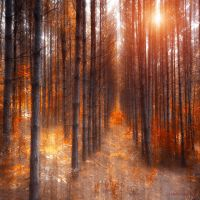 fast growing by ildiko-neer