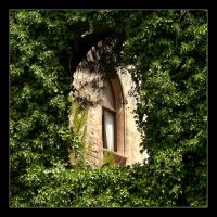 Behind The Green Curtain - Palma - Mallorca by skarzynscy
