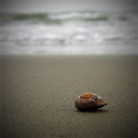 Sea Shell by farhadvm