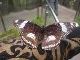 Butterfly 3 by Wyrd-Sistas-Stock