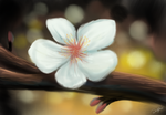 Lil' White Blossom. by Darxen
