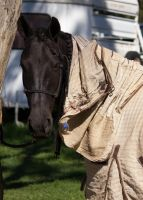 STOCK - 2014 Andalusian Nationals-48 by fillyrox