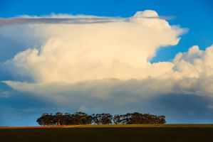 A row of Gums and a big cloud. by carlosthe