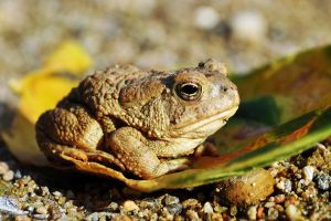 A wee Toad by masscreation