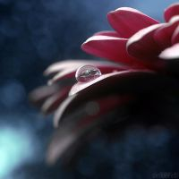 bokeh world.2 by simoendli