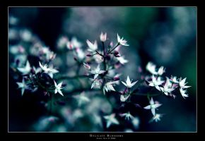 Delicate Blossoms by jennyclsun