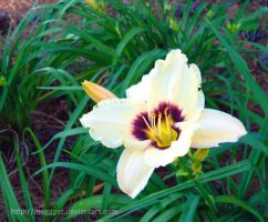 White and purple Lilly by MOGGGET