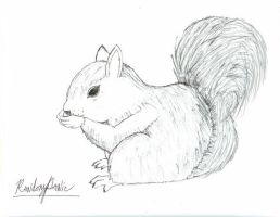 Squirrel by RandomPanic