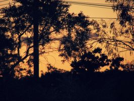 Trees by richasharma13