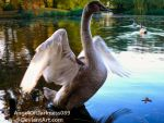 Young Swan shows us his beautiful wings by AngelOfDarkness089