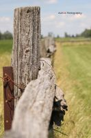Noon Fence by TrevorDuthie