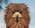 serious look by Daniel-Volpert
