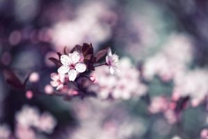 cherry blossom by RETROK1D