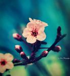Just a Memory of Spring VIII by MyLifeThroughTheLens