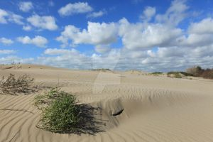 Dunes near Oostvoorne, South Holland by Looney33