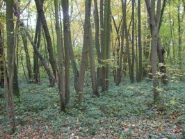 Wood, Forest VIII by Anemya-Stock