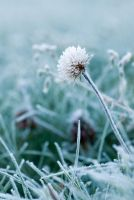 Frosty morning by Zelma1