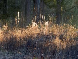 Sunlit Grass by Eco-Cate