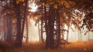 Keep the Peace by ildiko-neer